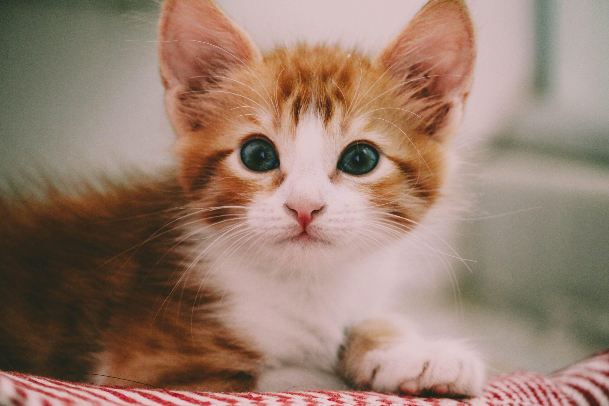 Import Cats